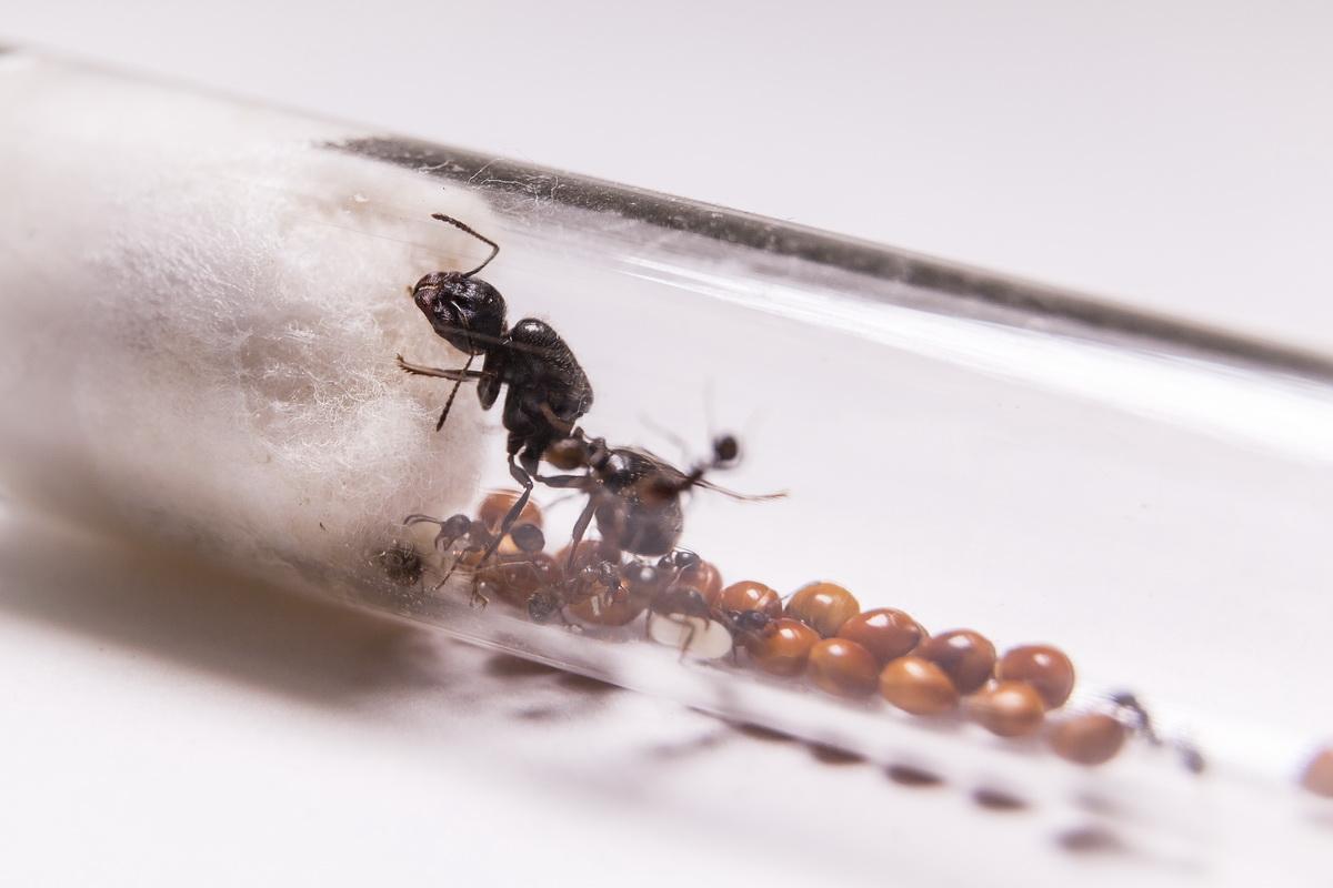 Бизнес идеи с насекомыми бизнес план агентства бесплатно