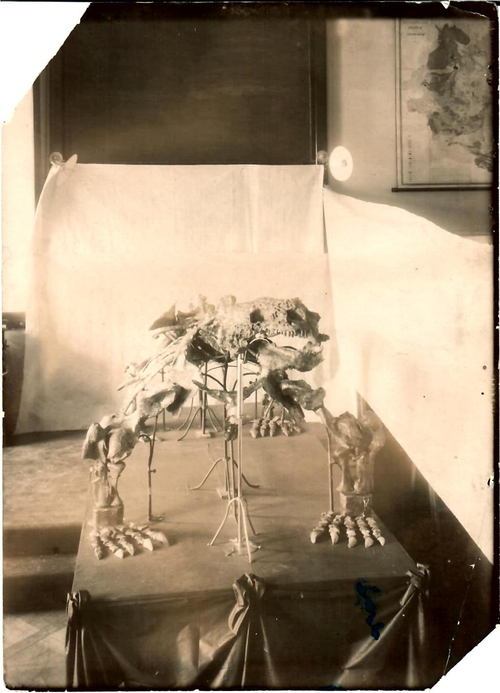 Первый общественный показ первого скелета русского ящера в аудитории Геологического кабинета СПбГУ