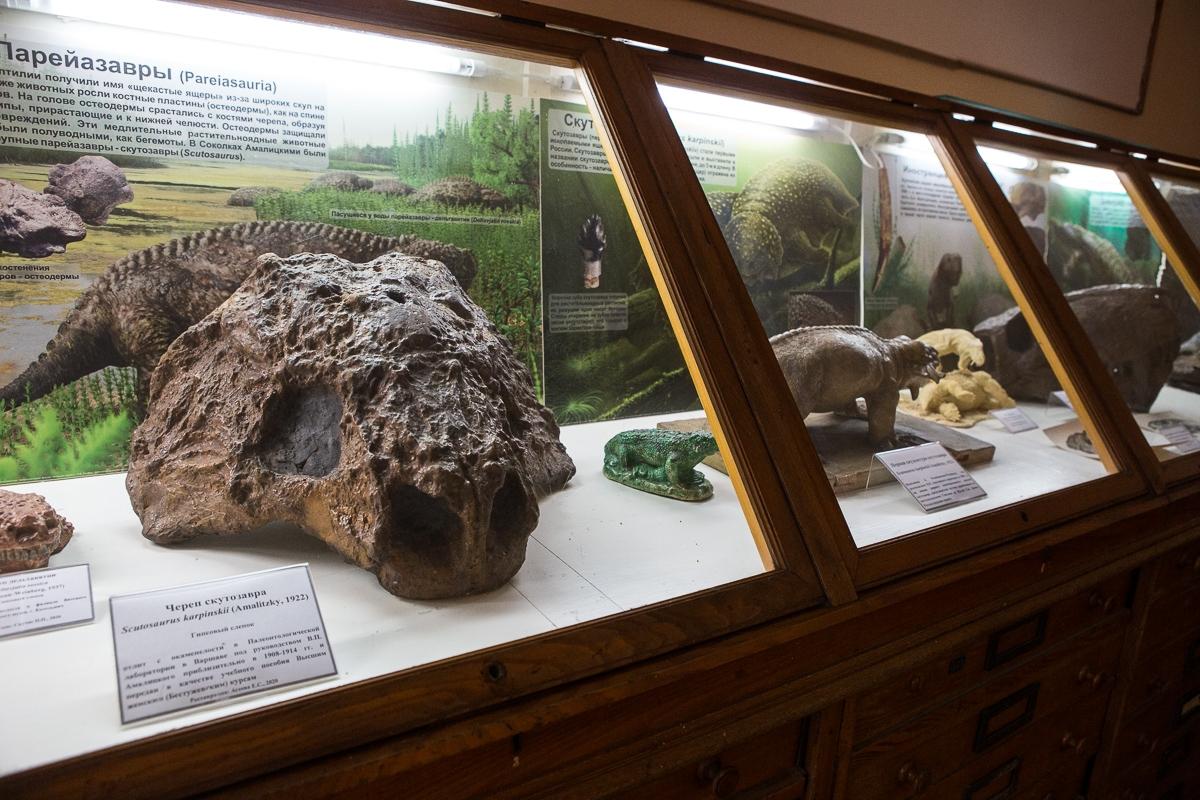 Гипсовый слепок черепа скутозавра в экспозиции