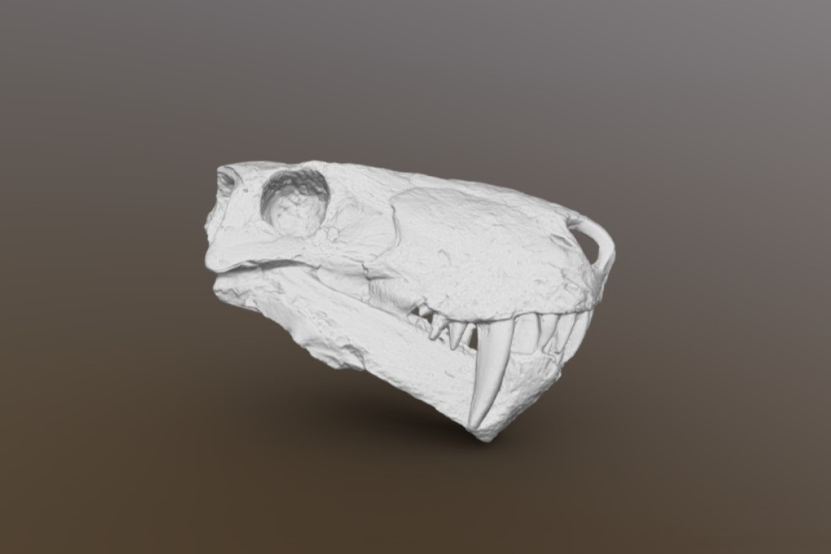 3D-модель черепа иностранцевии (Inostrancevia alexandri)