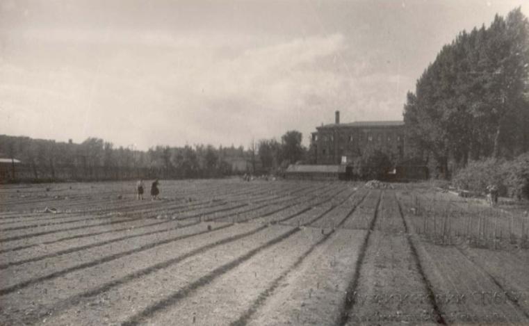 Весна 1948 года, грядки для цветов — на этом месте сейчас Большая пальмовая оранжерея