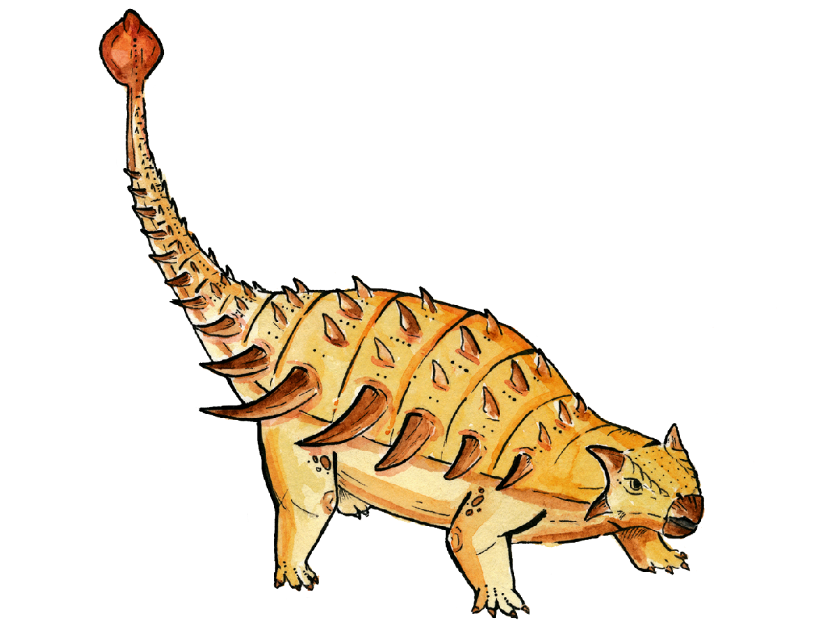 Как мог выглядеть анкилозавр Bissektipelta archibaldi. Изображение предоставлено авторами исследования.