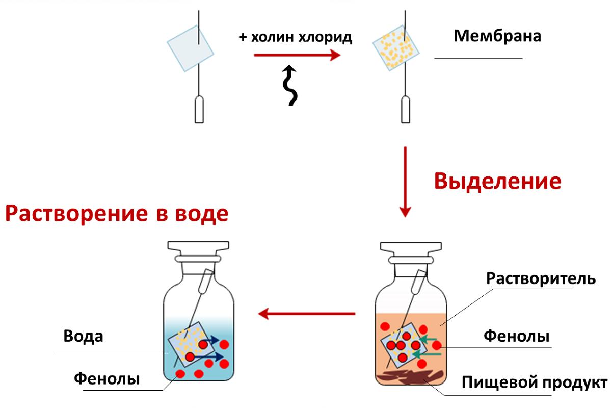 spbu.ru