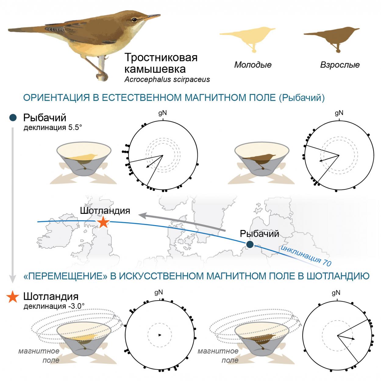 Схема эксперимента. Рисунок Екатерины Чернецовой