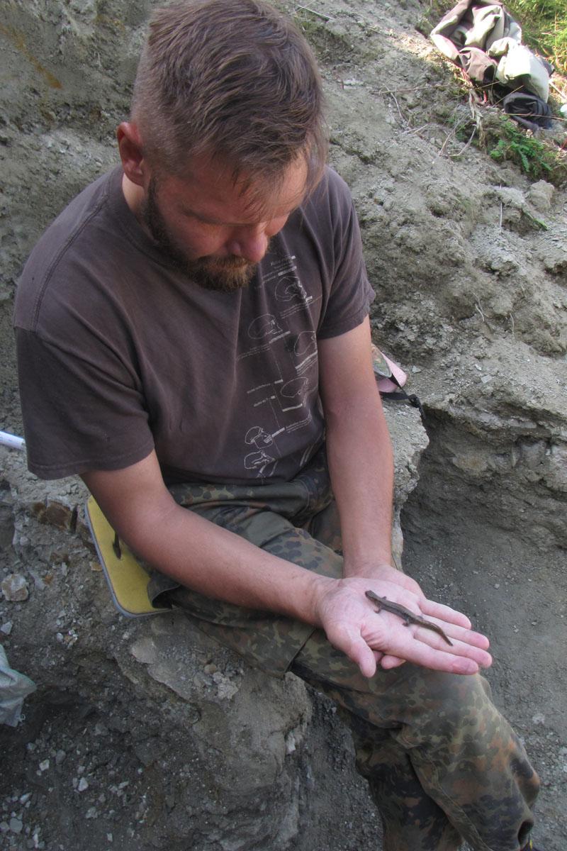 Доцент СПбГУ Павел Скучас держит современную саламандру изЯкутии—  сибирского углозуба