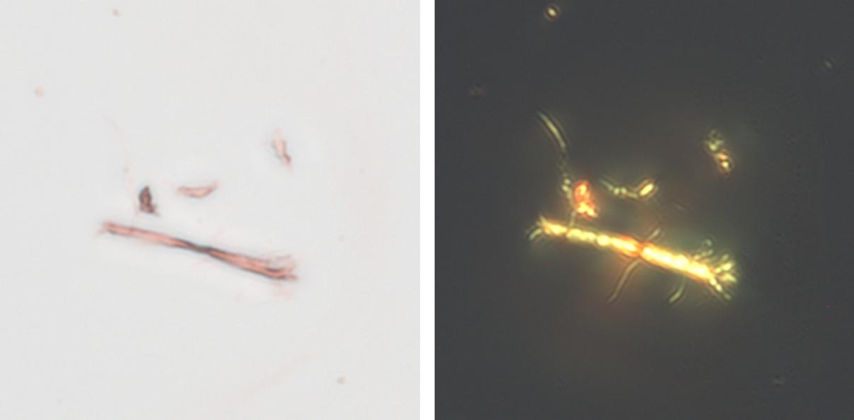 Оптическая микроскопия фибрилл вицилина, полученных in vitro и окрашенных красителем конго красным, в проходящем (слева) и поляризованном (справа) свете. Источник: Antonets et al., PLOS Biology, 2020
